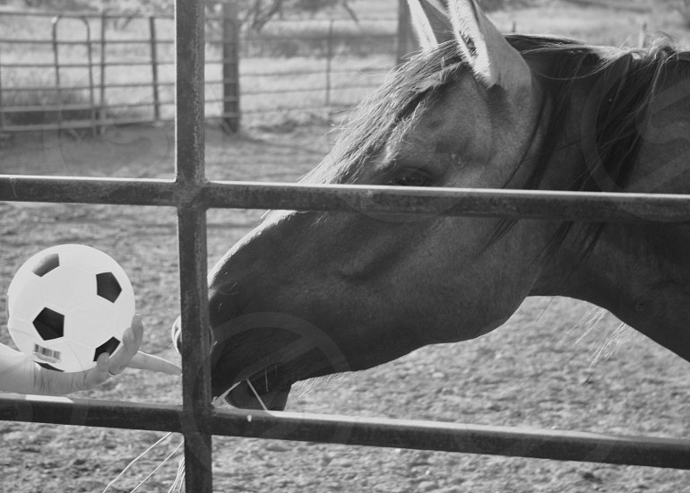 white and black soccer ball in front of a black horse on grayscale photography photo