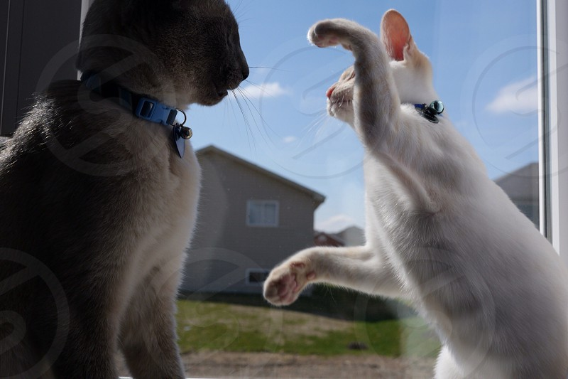 Cats playing in the window photo
