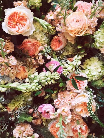 peach flower floral florist flowers juliet rose roses tuberose fern botanical pink pastel wedding bridal garden  photo