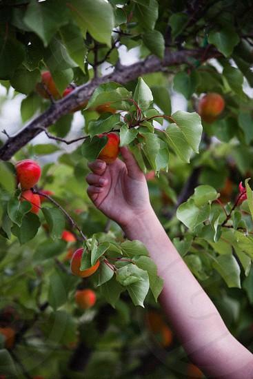 person holding orange fruit photo
