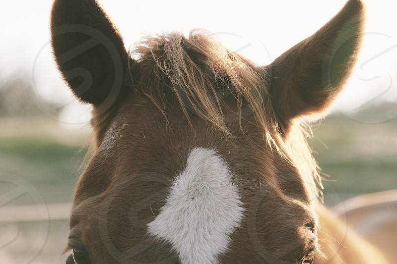 Closeup of horse during golden hour. photo