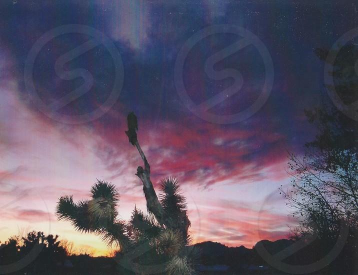 Beautiful desert purple pink sunset  photo
