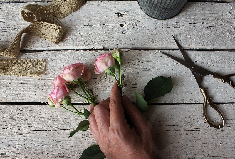Trimming roses with vintage lace and brass scissors. photo
