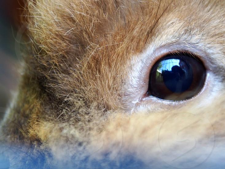 animal eye photo