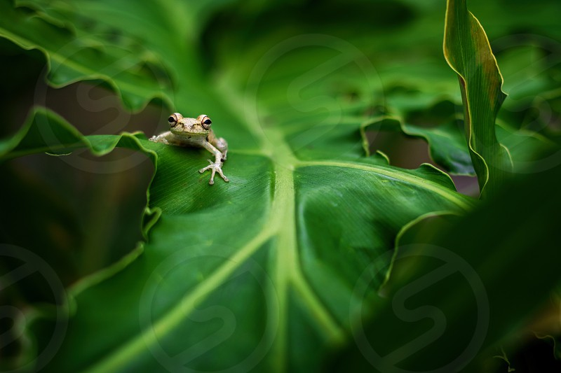Green frog spring  photo