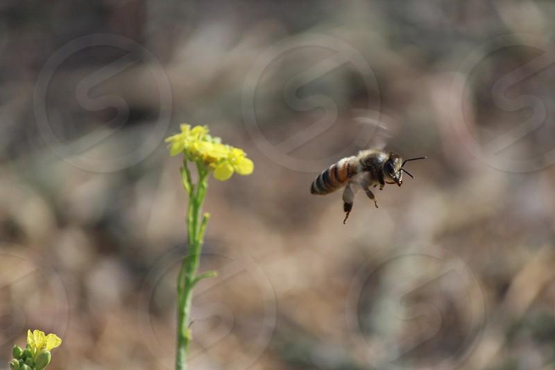 Bee flower photo