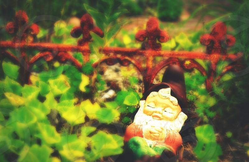 A cute gnome statue sitting in a garden. photo