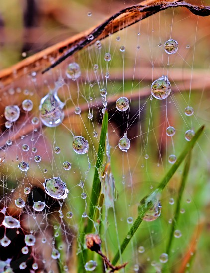 Water Drops on a Web photo