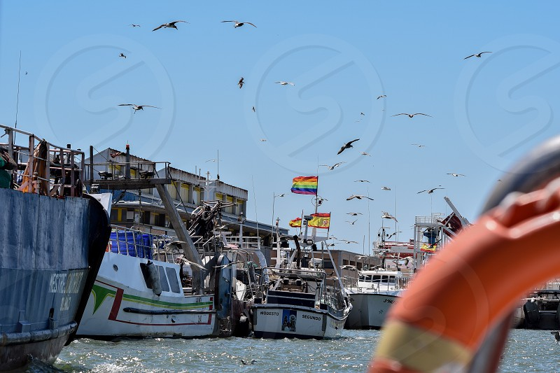 A photo off of birds circling fish in a Marina in Ayamonte photo