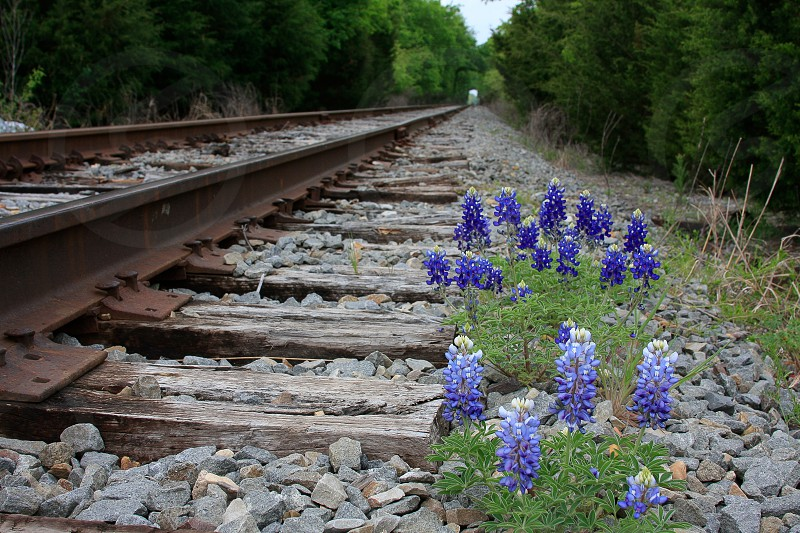 view of blue flower beside railroad photo