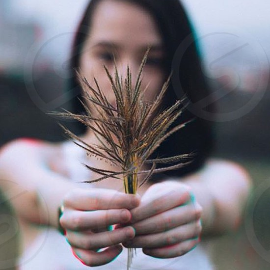 Wheat grass leaf girl hand love cute colors blue blur focus sunset photo