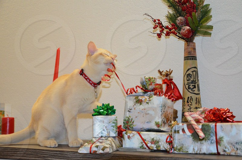 Cat opening his presents photo
