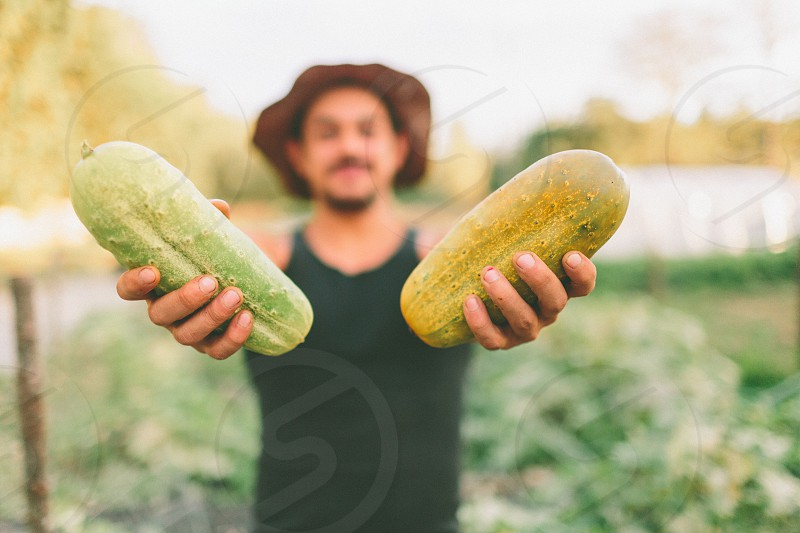 A young man holding up cucumbers freshly picked from the garden. photo