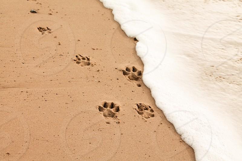 Dog footprints on the beach photo