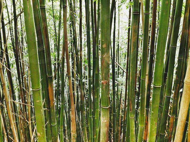 Bamboo Oahu Wailua Falls Hawaii Hiking Adventure Travel photo