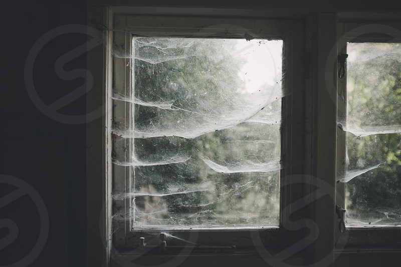 white cobwebs on white window pane photo