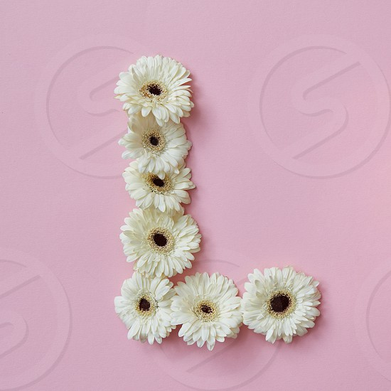 letter L made of gerbera flowers. Part of the word LOVE  floral alphabet flatlay photo