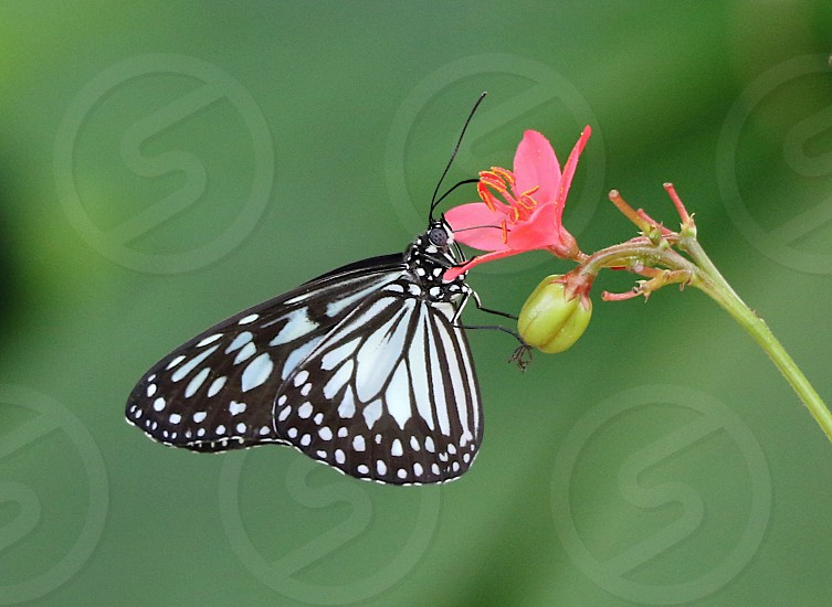 Spring butterfly colorful green insect photo