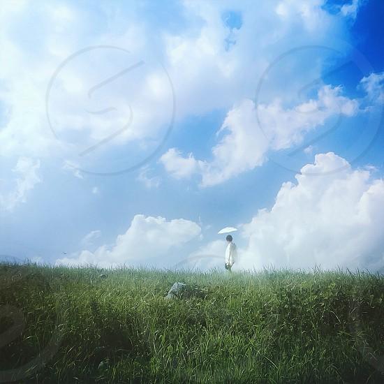 white umbrella photo