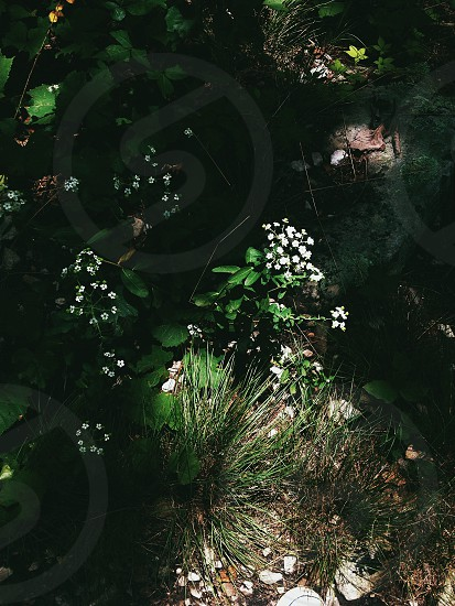 green grass with white flower photo