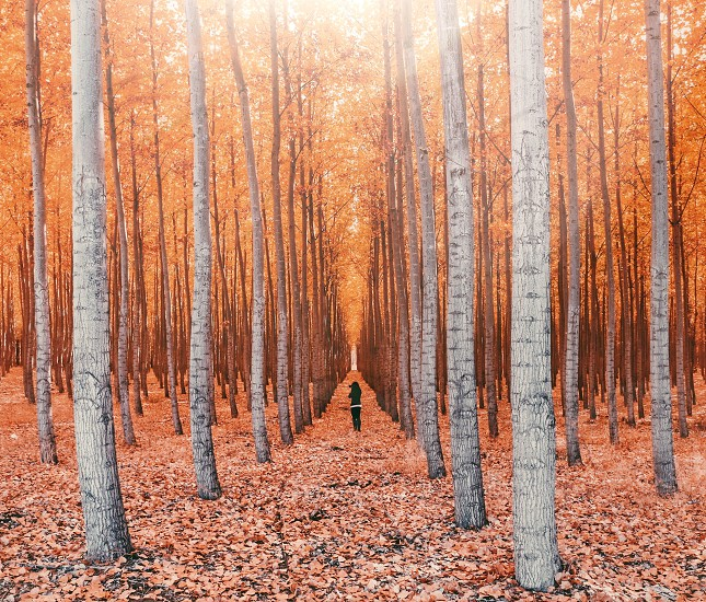 person standing between tall trees surrounded with dried leaves during daytime photo