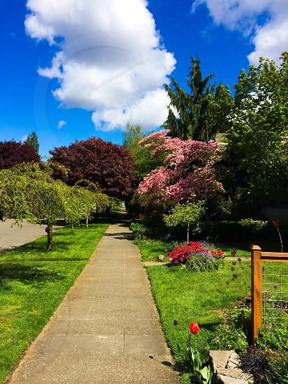 Diverse assortment of foliages. Seattle neighborhood  photo