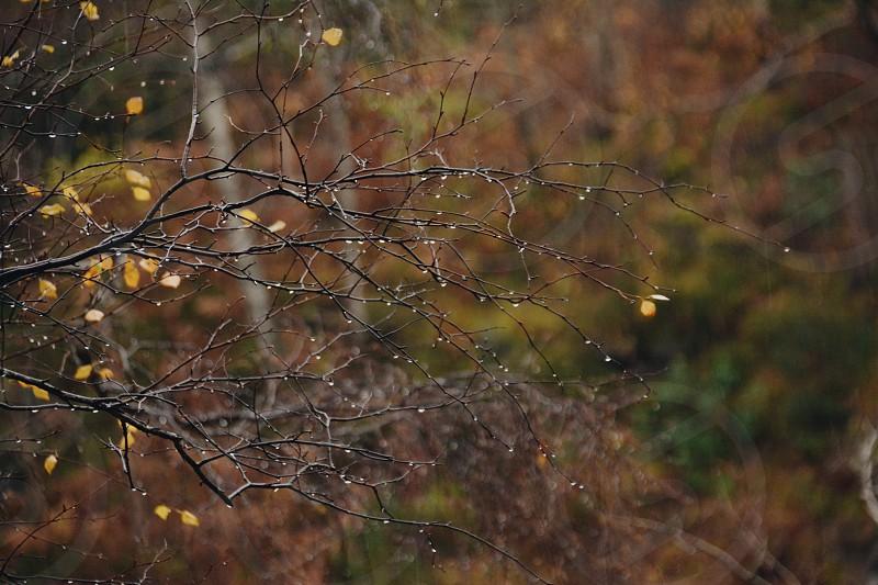 Rain branch drops moody rainy weather Scotland autumn photo