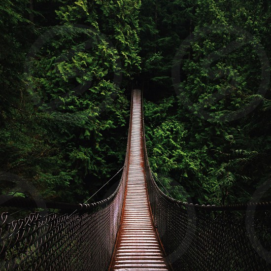 Forest suspension bridge in Canada photo