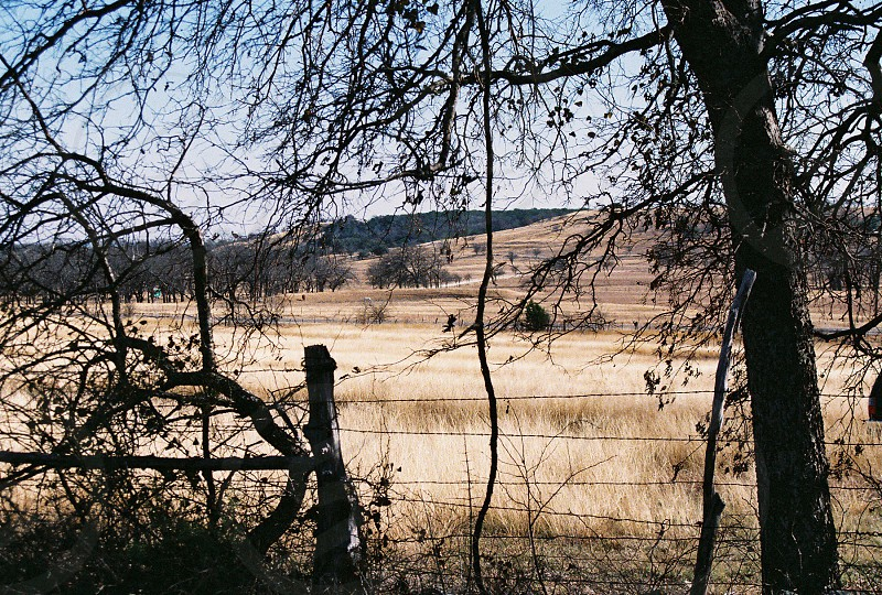 withered tree on grass field photo