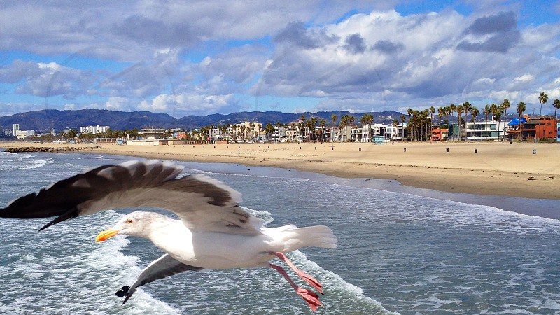 ocean view with seagull flying photo