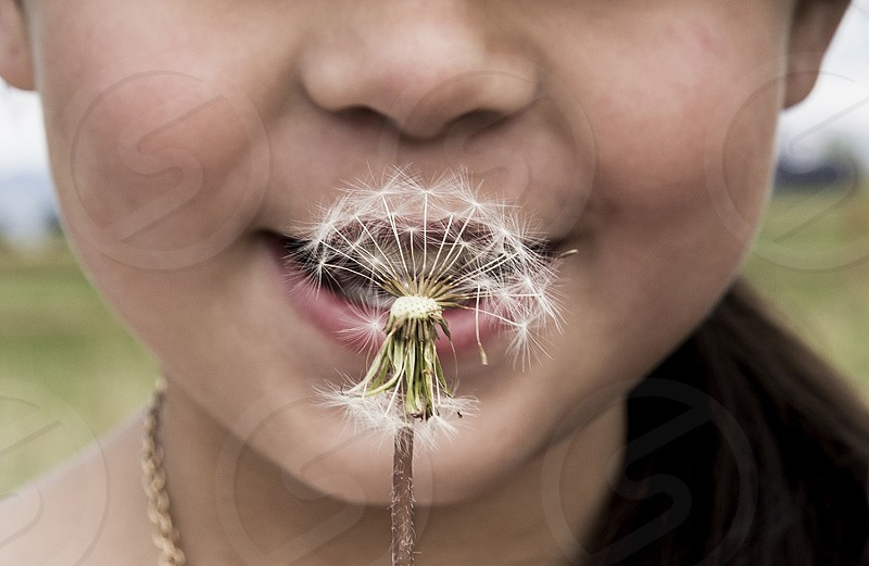 young girl smiles with her dandelion in Louisville Colorado photo