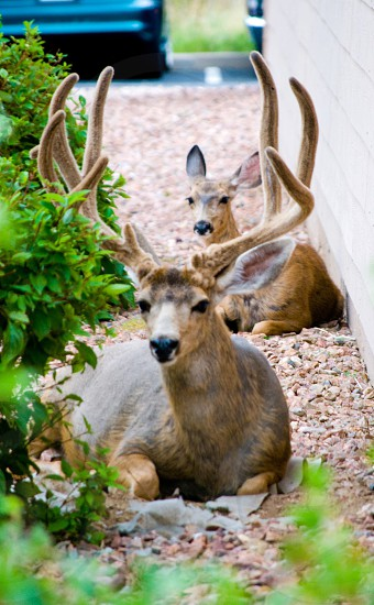 Deer family  photo
