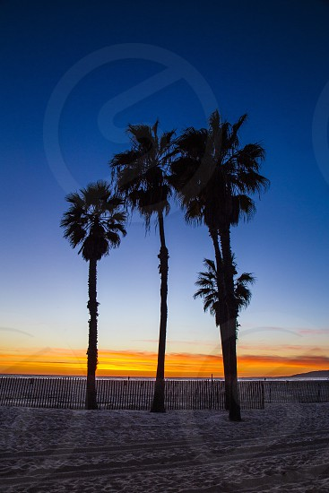 Deep blue and orange sky.  Beach at Sunset. Silhouetted palm trees. photo