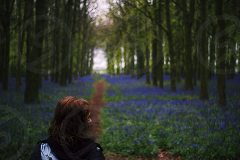 Bluebell path. Pathway. Bluebells. Woods. Forest. Trees.  photo