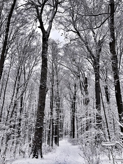 brown tree trunk and white snow photo
