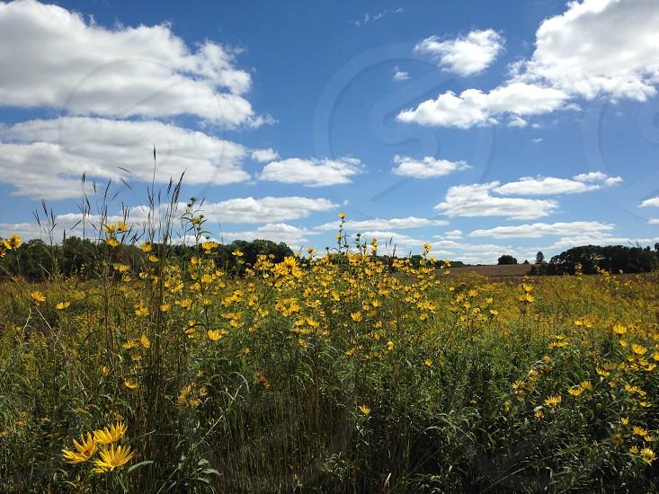 Flowers prairie landscape photo