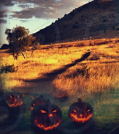 """Jack """"O"""" Lanterns with scarry glowing faces wait for the evening on Halloween in the dark shadows of the trees in the fall. photo"""