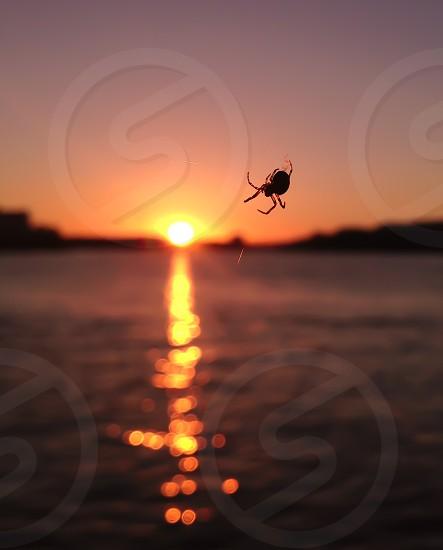 black 6 legged insect photo
