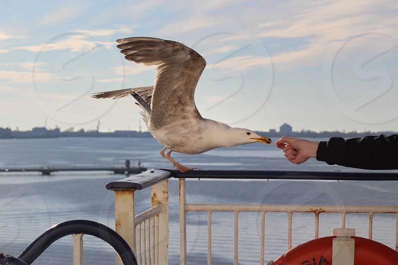 Cruise ship seagull travel sea  photo