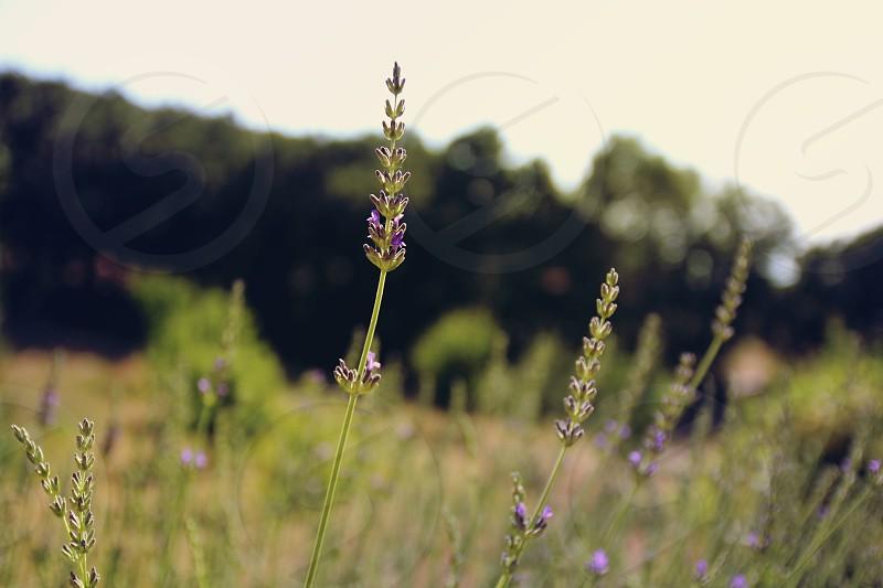 Flower lawn landscape photo