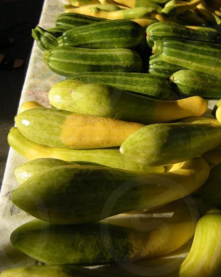 Squash and zucchini photo