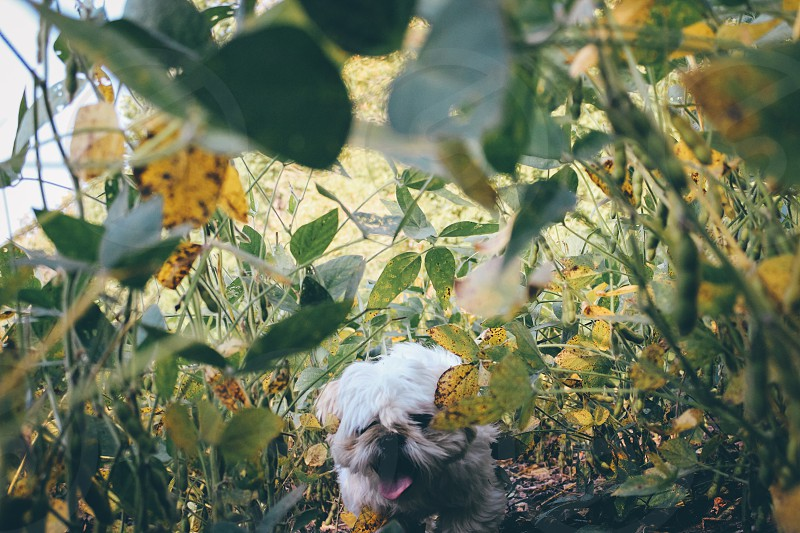 white long coated dog in the middle of green and yellow leaf plant during daytime photo