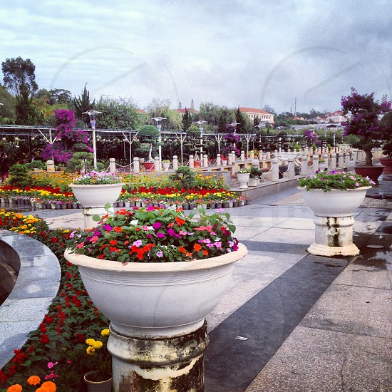 white tiled park with potted plants photo