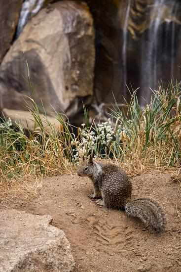 squirrel yosemite waterfall photo
