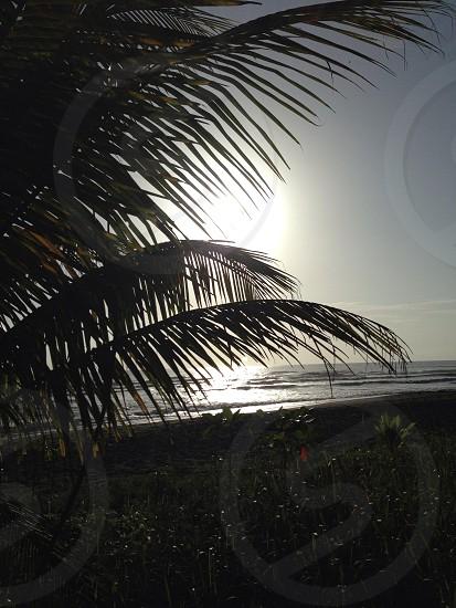 Sun beach Palm tree silhouette  photo
