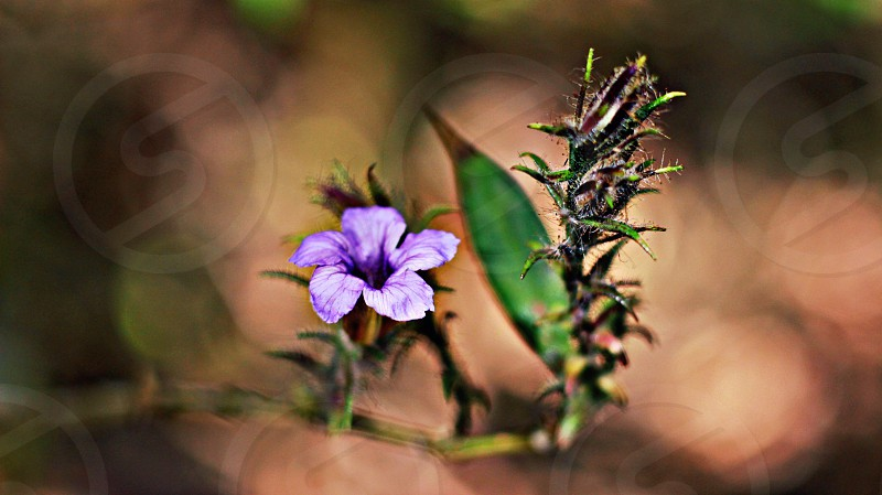 #cannon700D #forest flower #outdoor photo