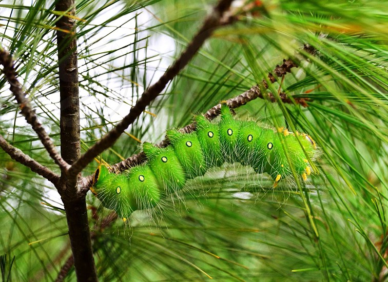 Greencaterpillartreenaturebeautyoutdoorsfurrycreature  photo