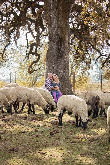 Father and daughter farm sheep country sweet love family  photo