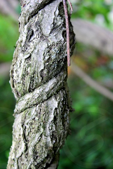 brown tree trunk photo