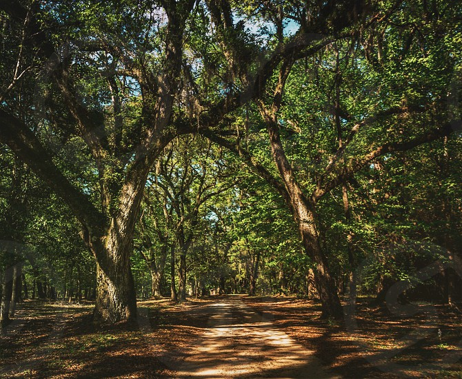 Blakely state park alabama Spanish fort nature trees path road outdoors spring photo